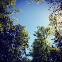 сердце из крон деревьев