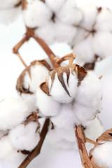 Baumwolle Fasern