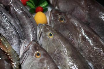 Fresh bluefishes