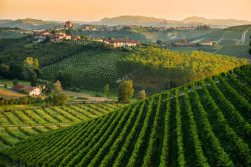 fototapeta pagórkowaty krajobraz z winnicami