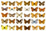 Fototapety Butterfly set