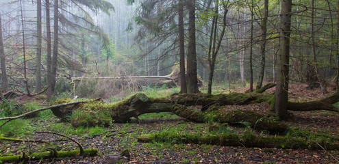 Autumnal landscape of old forest and broken tree