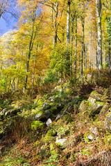 Forêt en automne, rochers, troncs