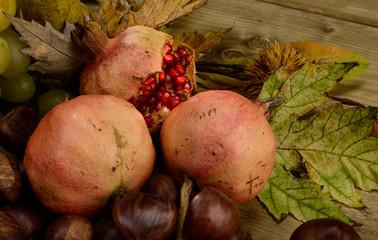 Pomegranate in autumn