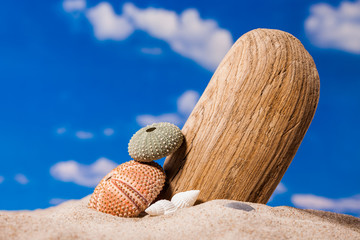 Sea shells on sand and blue sky