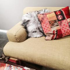 Sofa with fancy cushions