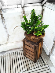 Green plant and old wooden crate