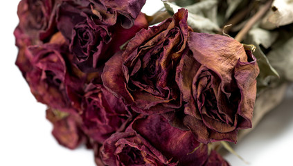 Closeup of withered roses