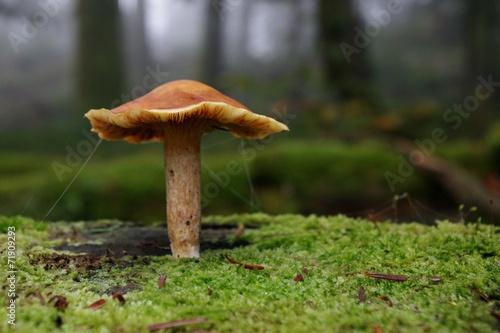 champignon sur mousse - 71909293