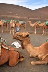 niño entre camellos