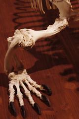 Dragon reptile skeleton foot