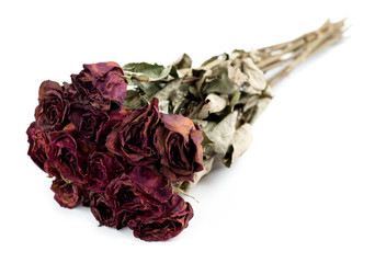 Faded dead rose bouquet isolated against a white background