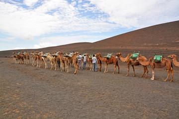 pastores y camellos