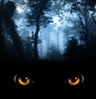 Look from darkness - 71910845