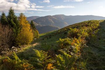 Montagne, fougères et vallée dans les Vosges