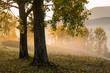 yellow trees in fog