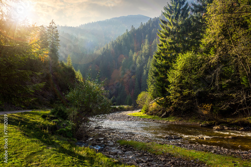 Foto op Aluminium Rivier forest river in mountains