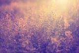 Blurry retro colored meadow
