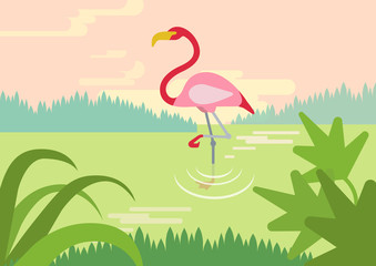 Flamingo swamp habitat flat cartoon vector wild animals birds