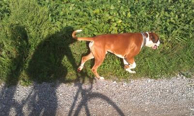 Passeggiata in bici con cane
