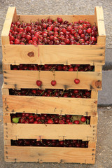 Cherries at a French market