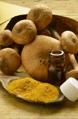 Armillaria mellea Honey fungus Chiodini Honiggelber Hallimasch