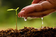 Leinwanddruck Bild - Seeding,Seedling,Male hand watering young tree