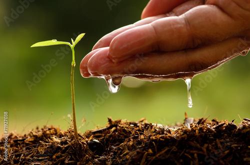 Leinwanddruck Bild Seeding,Seedling,Male hand watering young tree