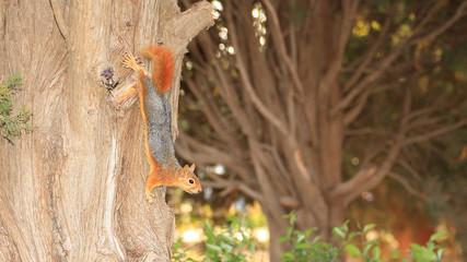 Ağaç Gövdesinde Sincap