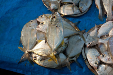 Poissons indiens