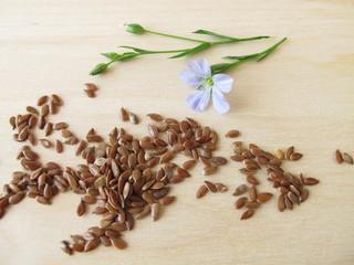 Leinsamen und blaue Leinblüte
