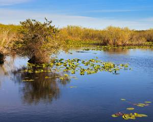 Everglades Landscape