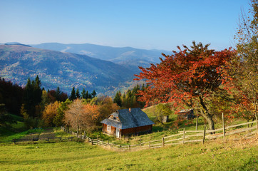 Picturesque autumn rural landscape with a tree with red leaves o