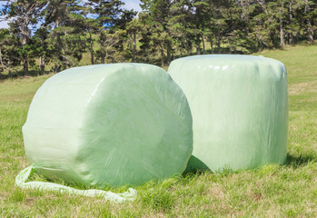 Bales of green crop silage, wrapped up in white plastic for stor