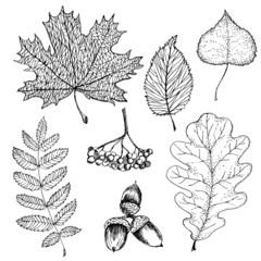 Vector set of autumn leafs illustration.