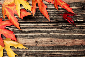 Autumn background. Colorful leaves on a wooden background.