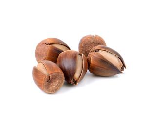thailand sweet chestnut on white background