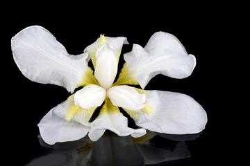Blossoming white flower