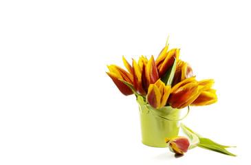 farbenfrohe Tulpen in Eimerchen auf weiss