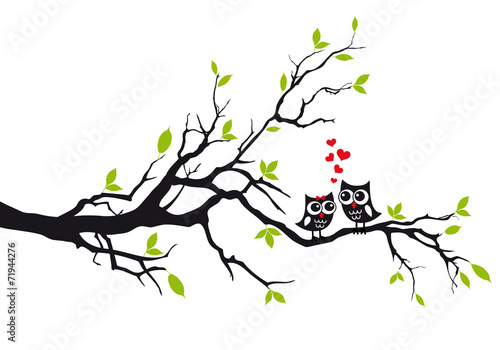 Cute owls in love on tree, vector - 71944276