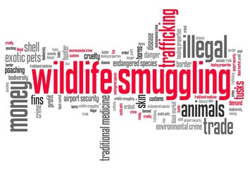 Wildlife trafficking - world cloud concept