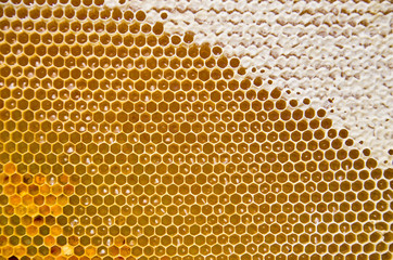 Honeycomb with fresh honey and pollen