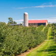 Country farm and  orchard landscape