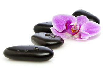 Wet pebbles and orchid flower
