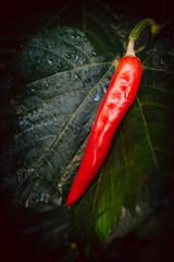 Red hot chili pepper on leaf