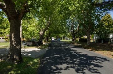 Canopy of trees along suburban road