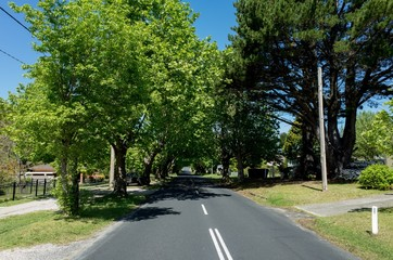 Canopy of trees along suburban road