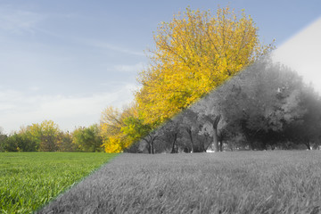 transition between autumn and winter, abstract image.