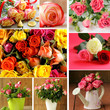 Set of different varieties beautiful flowers roses