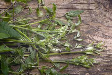 shoots of clematis vitalba (vitalbini), wild herb edible
